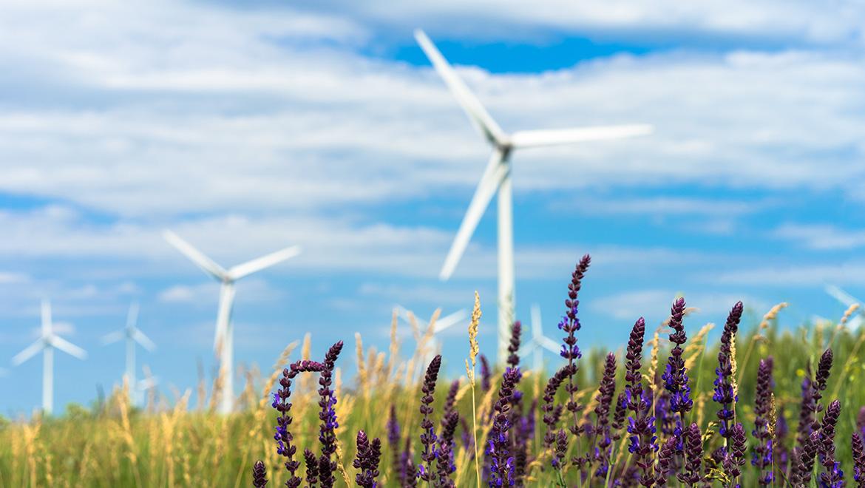 2021 será o ano das energias renováveis?